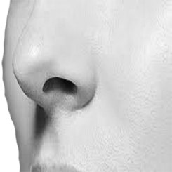 Rhinoplasty primary